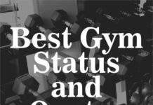 best gym status & gym quotes